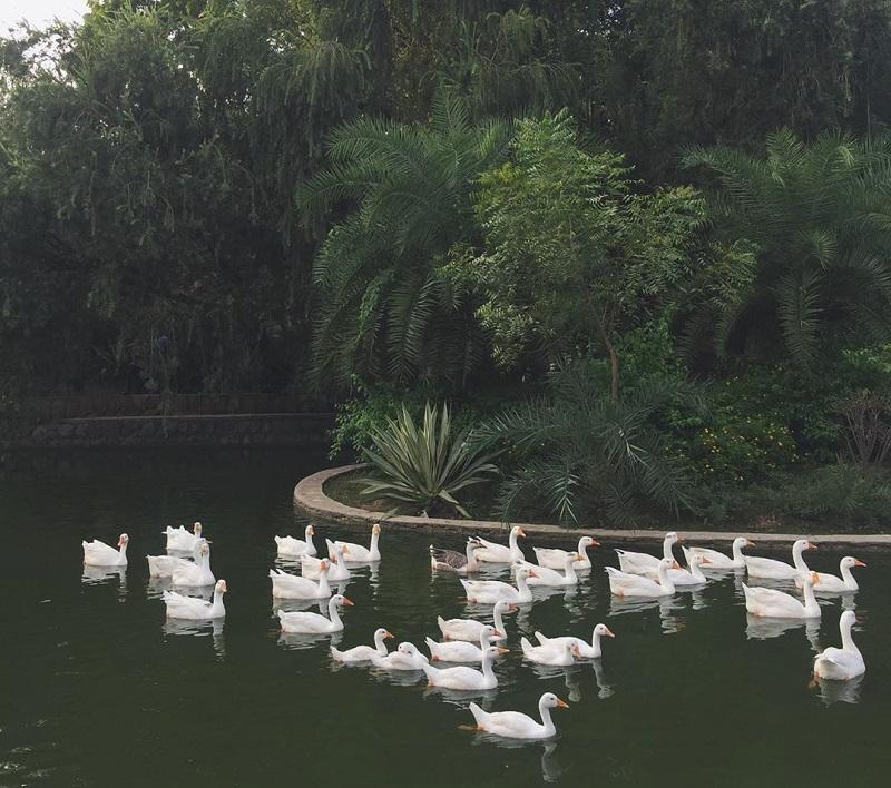Lodi Garden Lake - KahaJaun